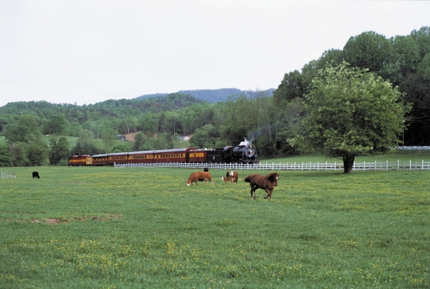 Train Horses